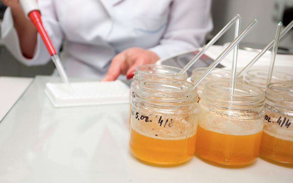 Лабораторные анализы для экспорта меда