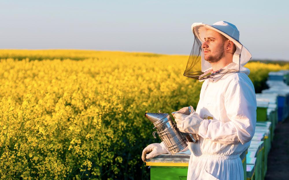 Фермер и пасечник. Как наладить выгодное сотрудничество?