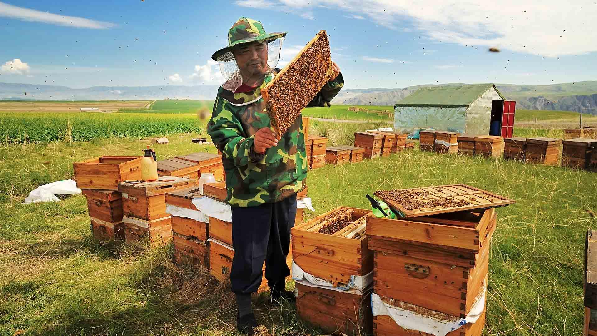 Какой мёд ипочём покупает Европа уКитая?