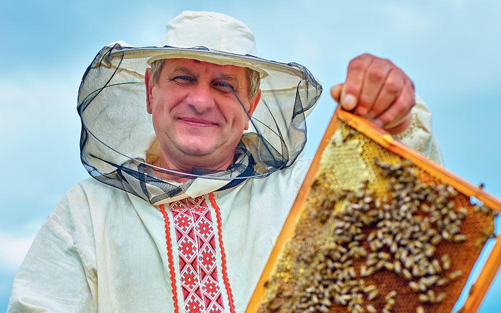 Стратегии участников медового рынка Украины