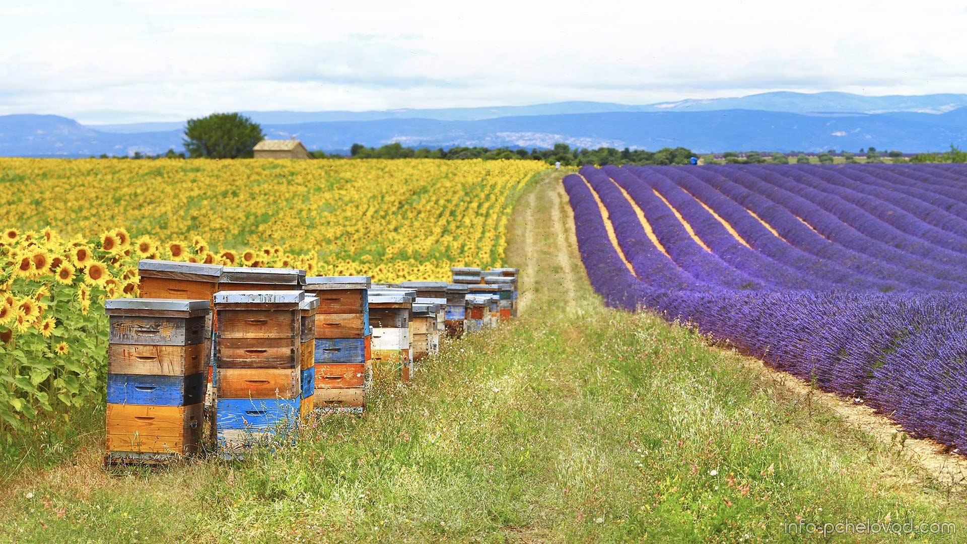 Почему фермеру выгодно опылять посевы?