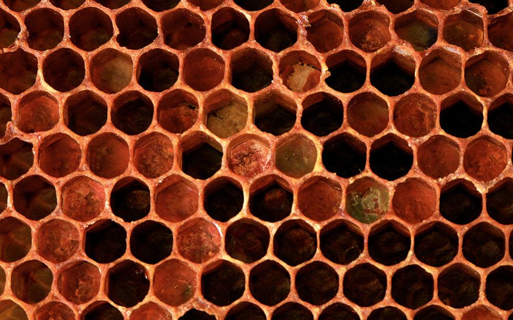 Перга — пчелиный хлеб