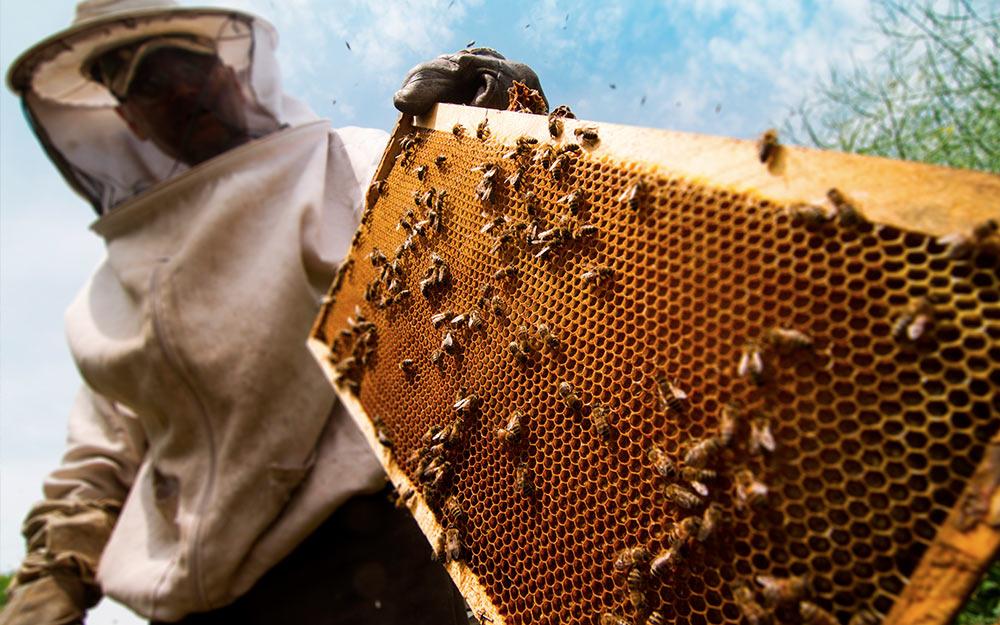 Как развить пчеловодство в Украине?