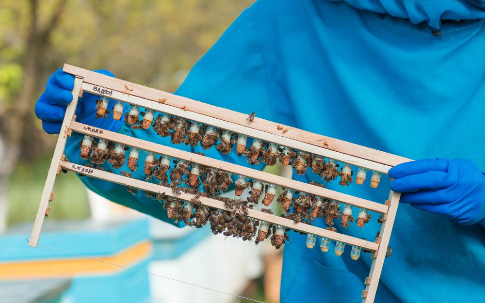Экспорт пчел и пчелиных маток