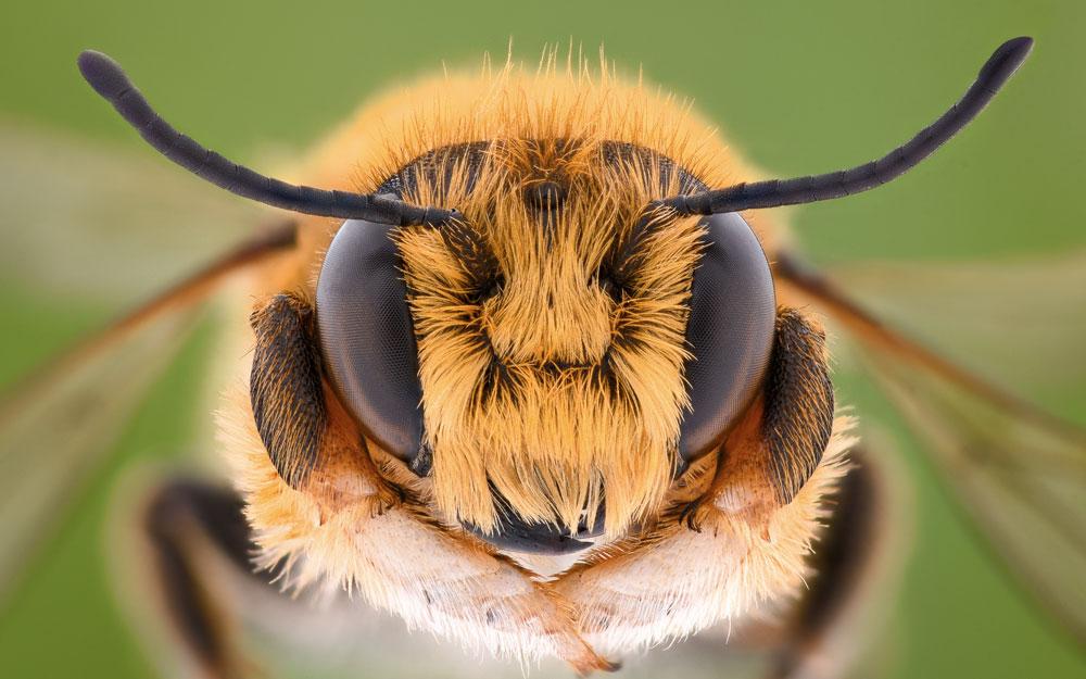 Современные методы определения породы пчёл