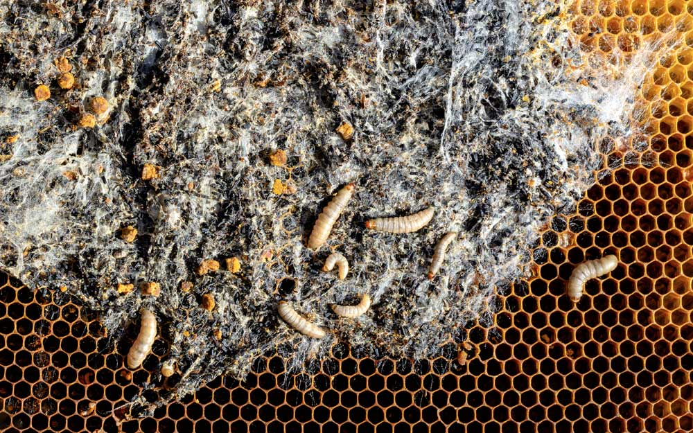 Профилактика заболеваний пчел
