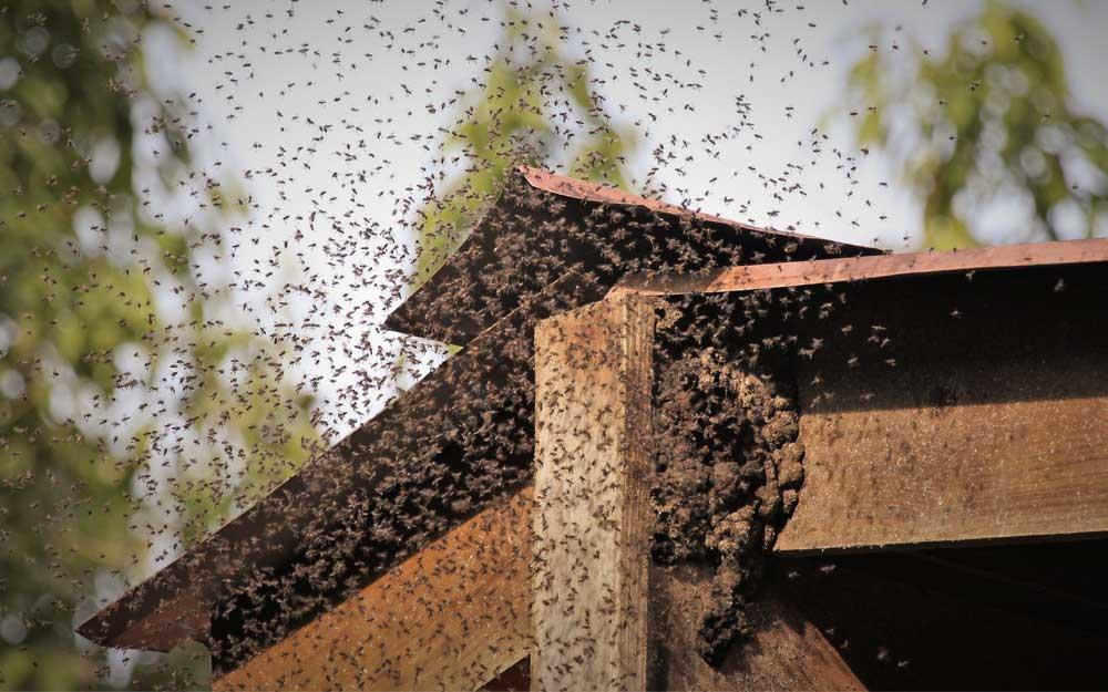 Почему бывают слёты пчелосемей икак отних защититься