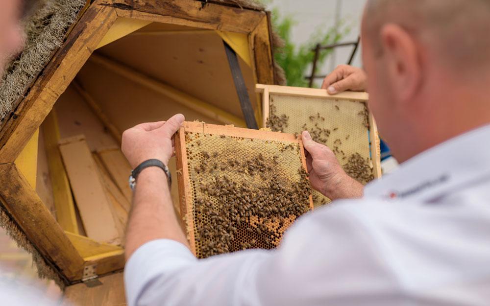 Как повысить эффективность пчелосемьи?