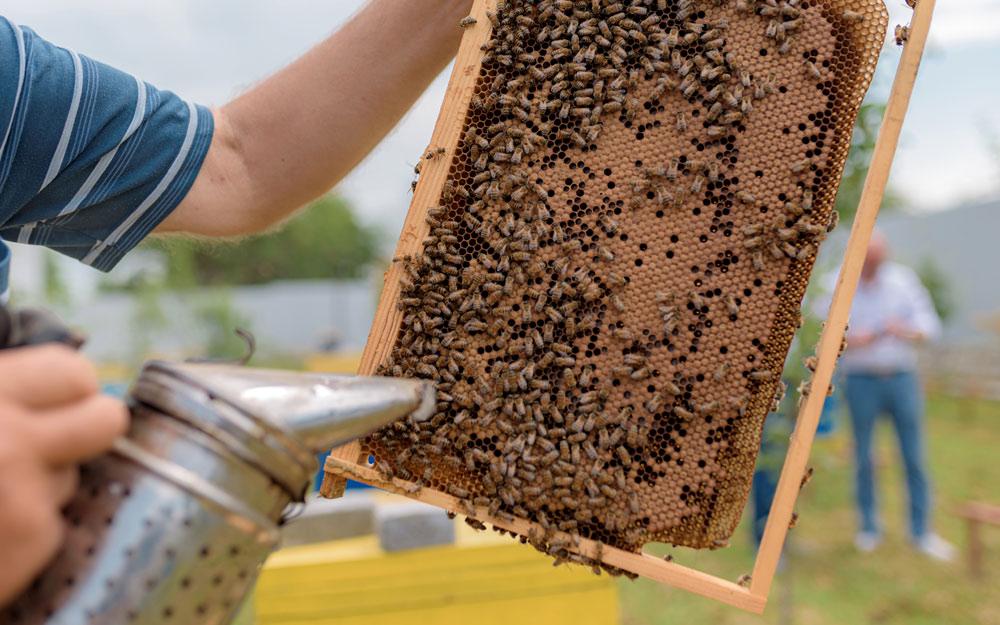 Что делать если у пчёл обнаружили паразитов?