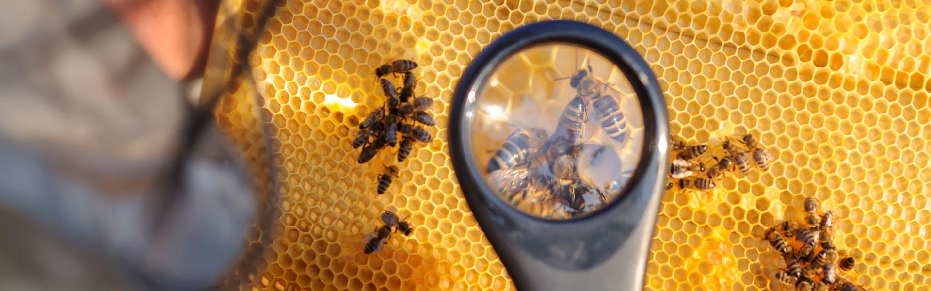 Новые тенденции вгенетике пчел