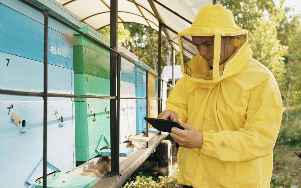 Цифровые технологии впчеловодстве