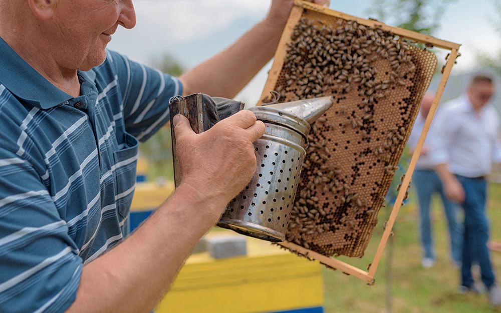Дотации за пчелосемьи в 2020 году. Новые изменения в госфинансировании пчеловодов
