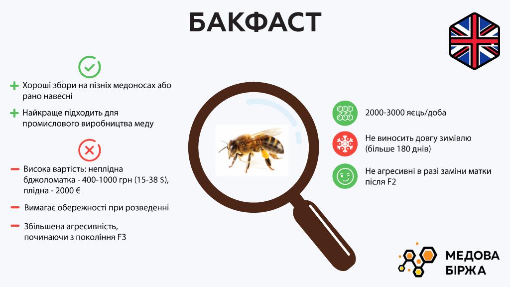 Вид пчелы — бакфаст