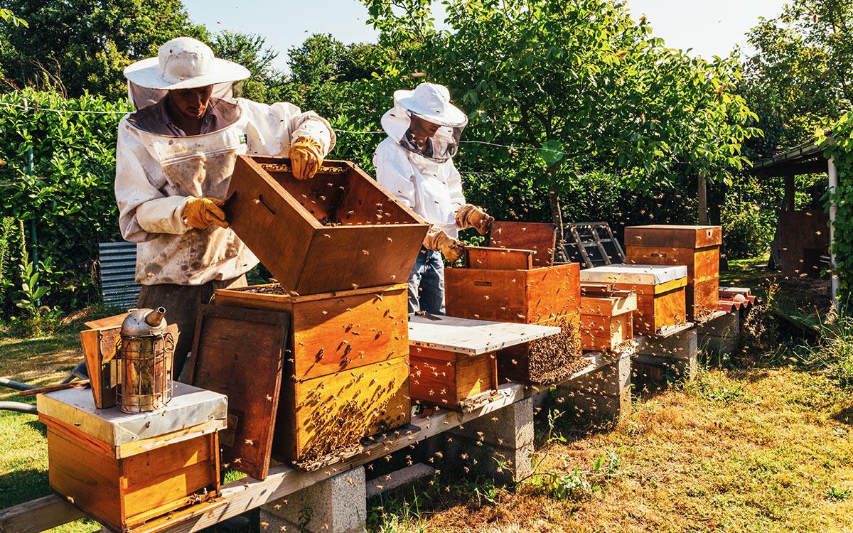 Анализ мирового медового рынка. Прогноз медосбора в Украине 2020