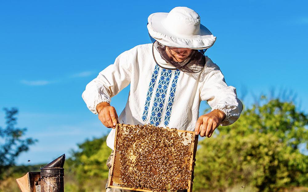 23 Мероприятия для пчеловодов Украины с июля подекабрь 2020года