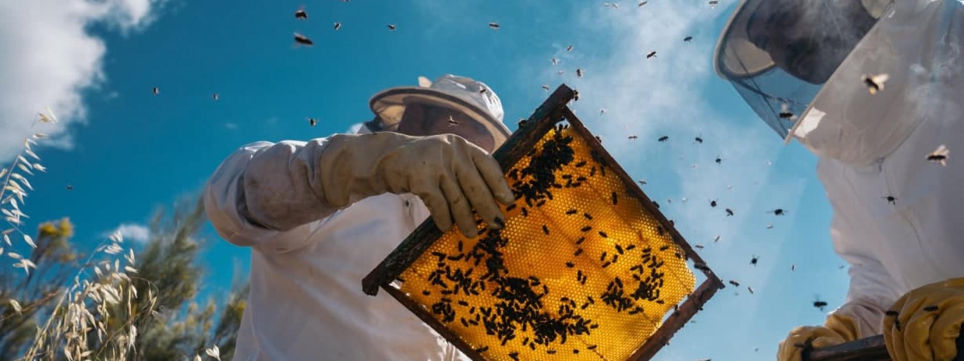 Чем обернётся пчеловодству принятие новых законов? Обзор проектов от депутатов «Батькивщины», «Доверия», «Слуги народа»