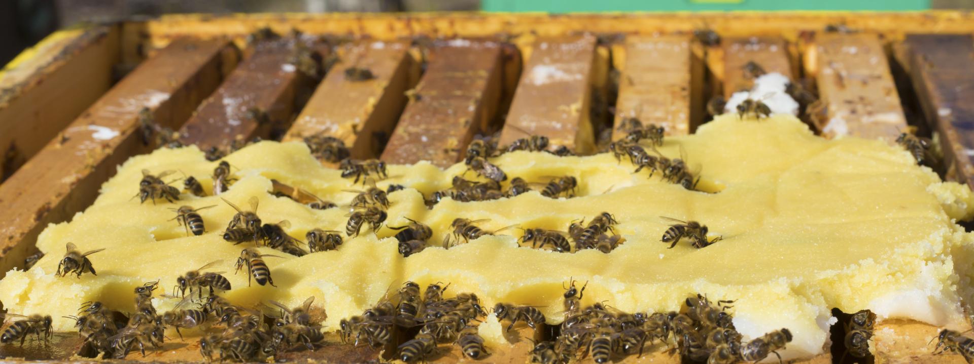Подкормки для пчёл — что используют пчеловоды в Евросоюзе и США
