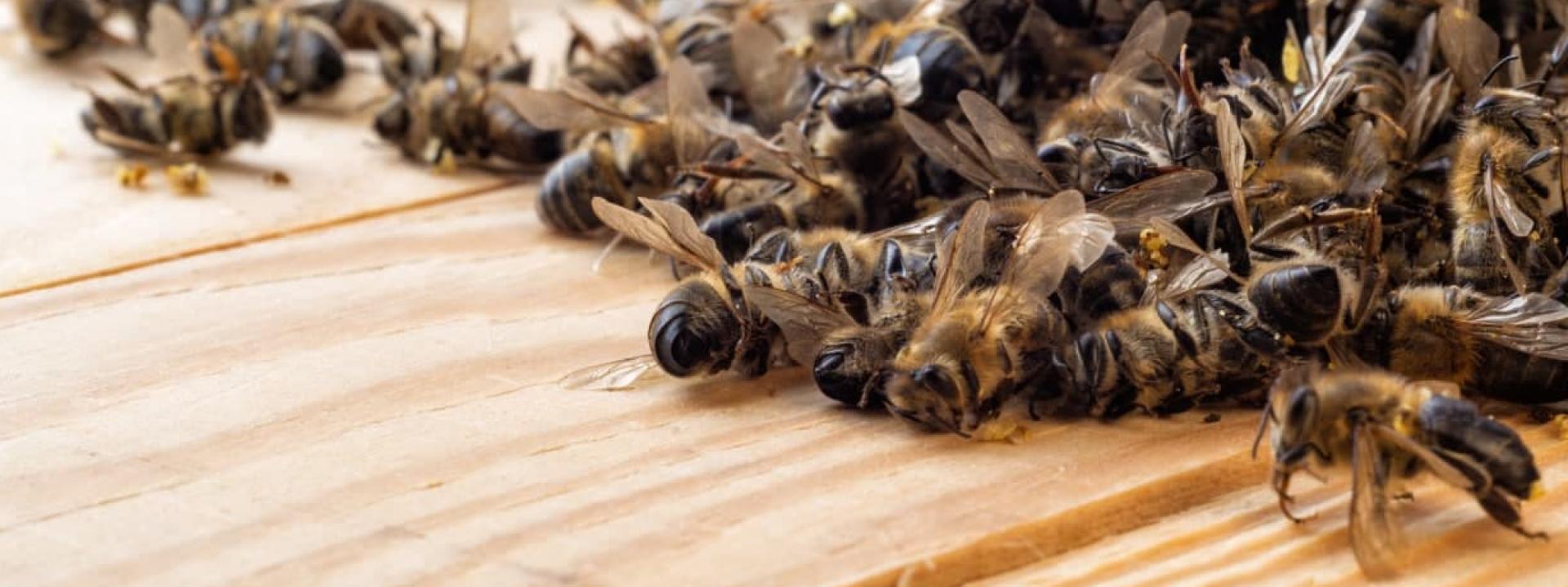Что делать при потраве пчёл в 2021 году