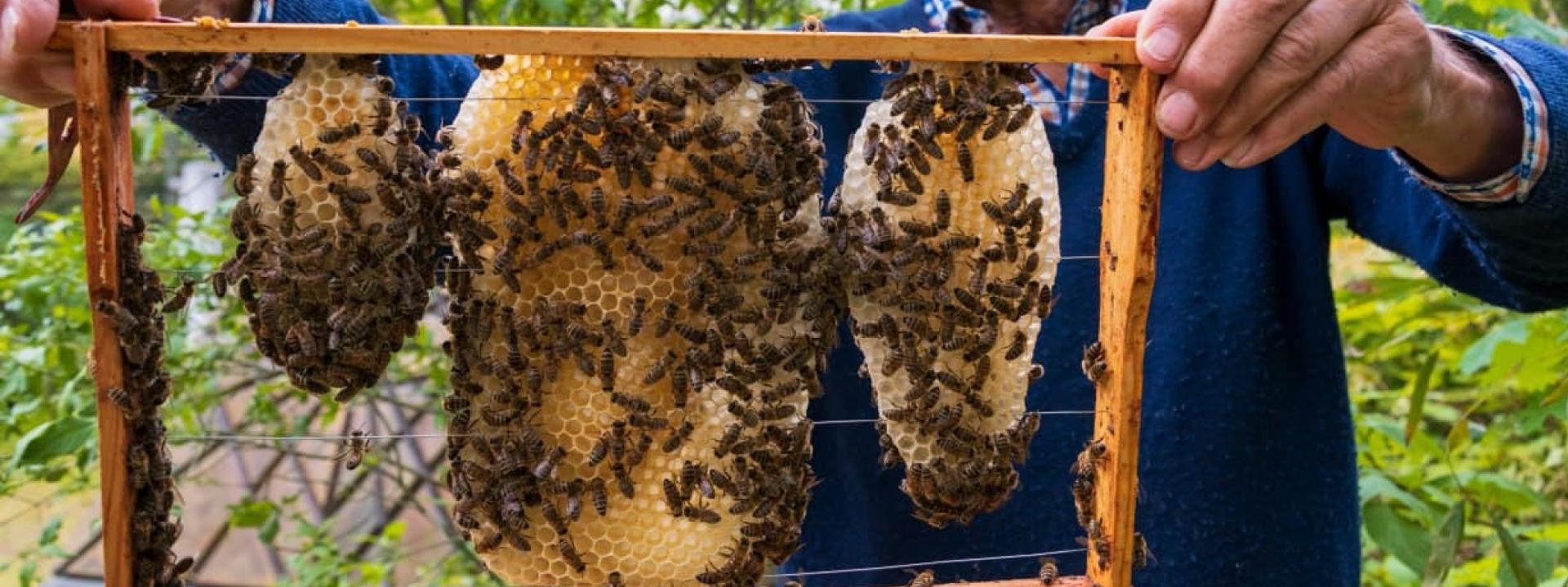 Немецкое пчеловодство — метод ротационного разведения пчёл