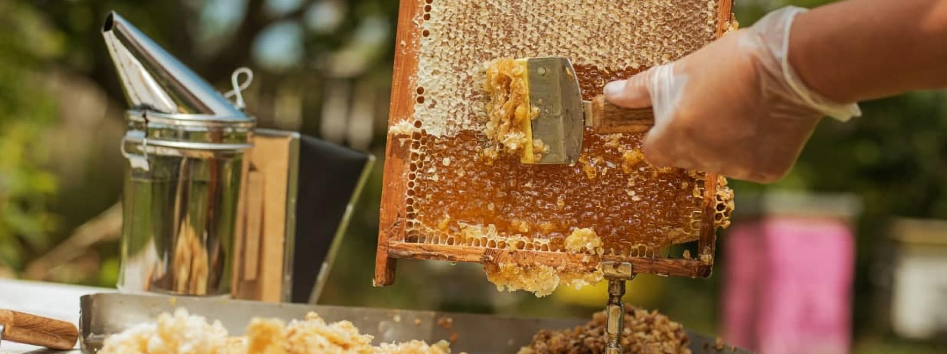 Продуктивность пчёл 120–200кг мёда с улья — полезные советы
