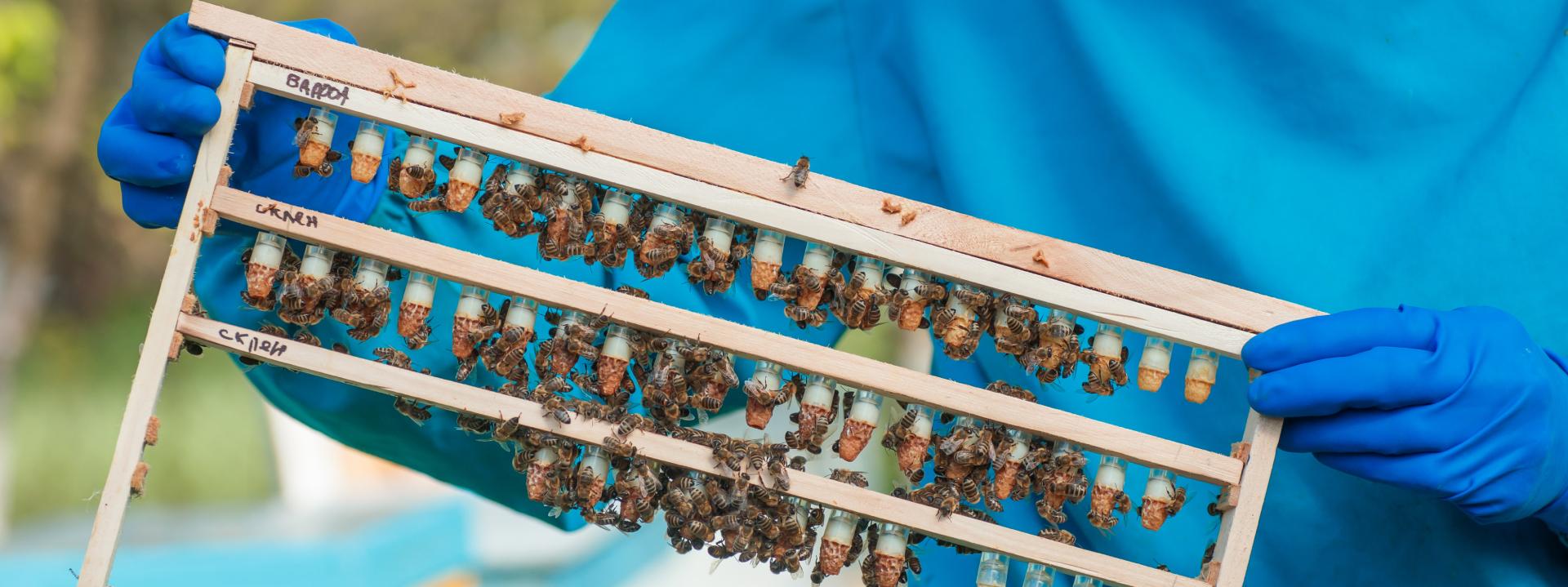 Рекомендации по селекции пчёл
