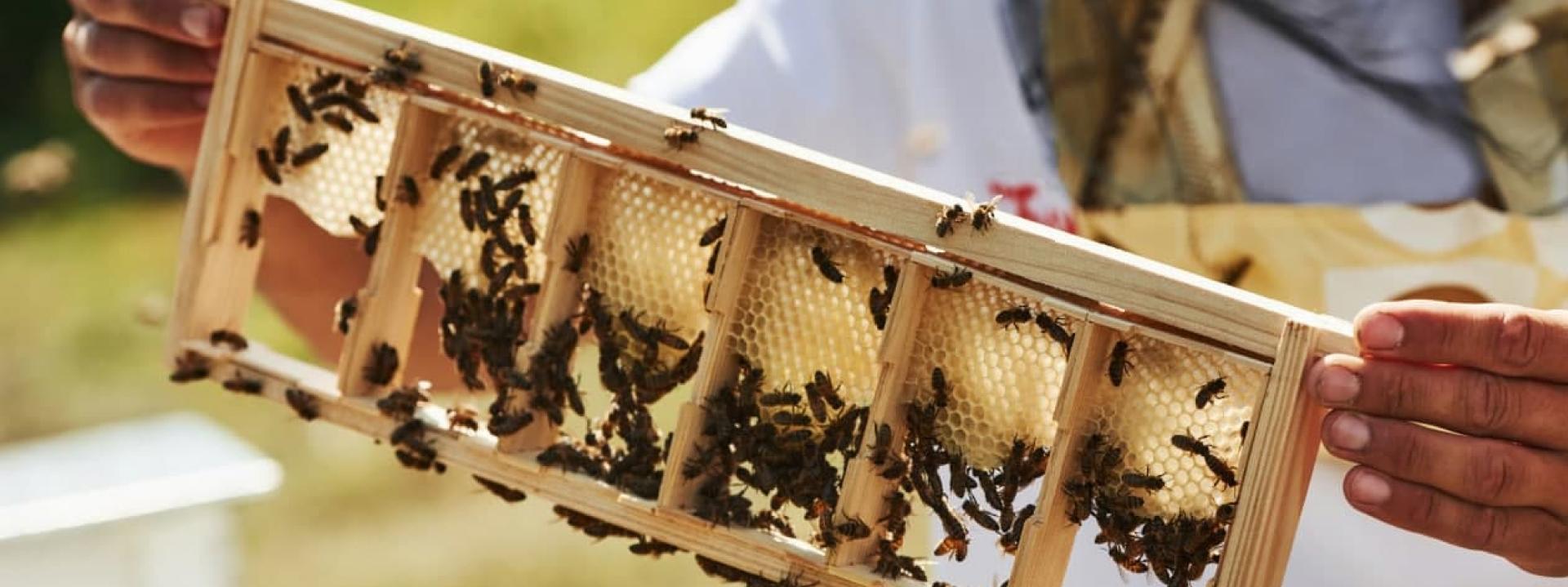 Как правильно использовать и создавать медово-перговый конвейер на пасеке